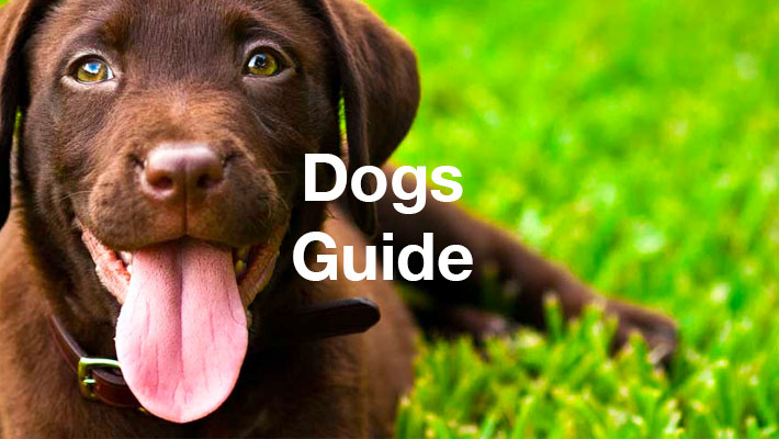Dogs Guide